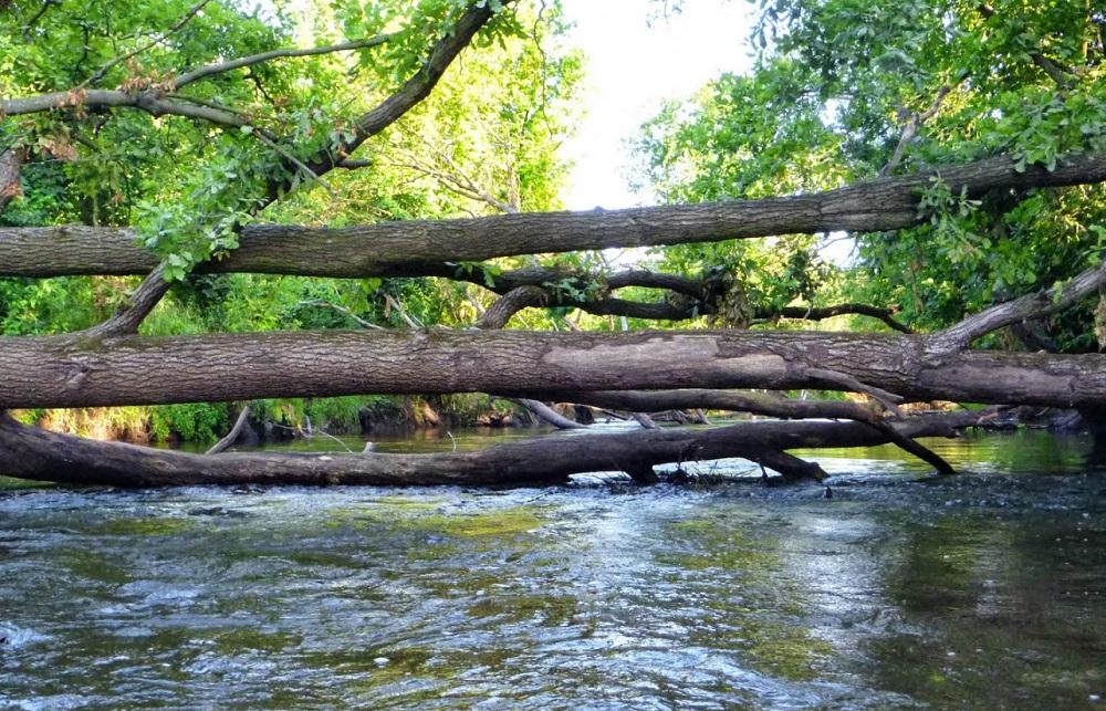 rzeka rawka